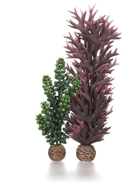 Oase biOrb Seeperlen & Seetang olivgrün