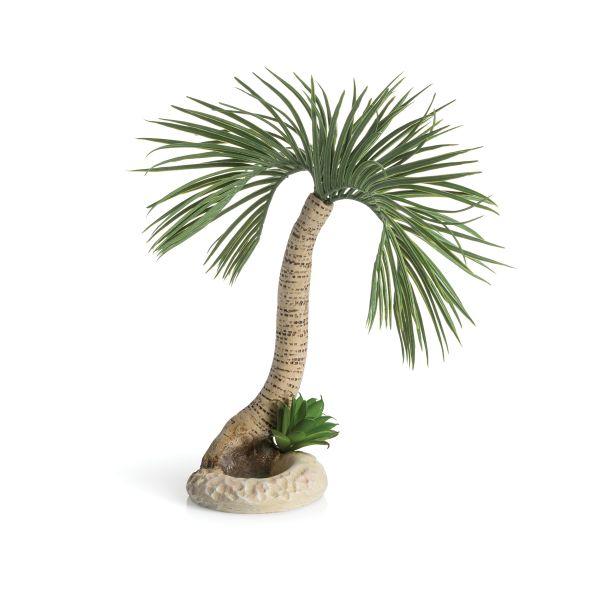 biOrb Palme Seychellen L