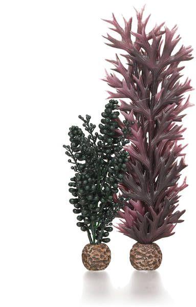 Oase biOrb Seeperlen & Seetang dunkelgrün