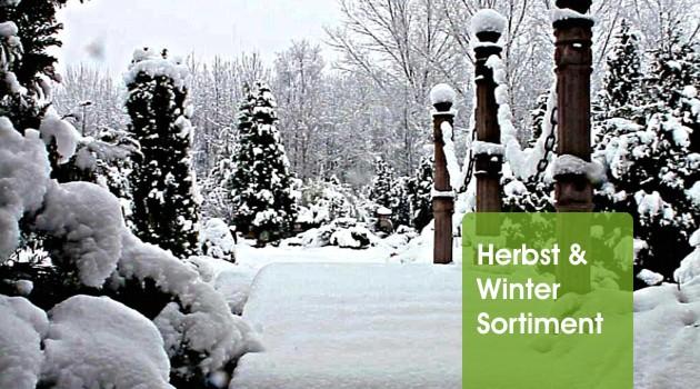 herbst winter sortiment oase oase. Black Bedroom Furniture Sets. Home Design Ideas