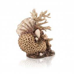 Oase biOrb Korallen-Muschel Ornament natural