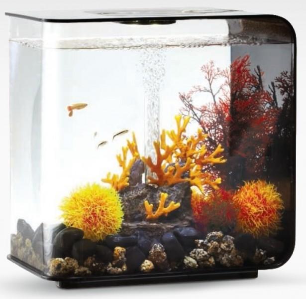 Oase Biorb Hornkoralle Klein Orange Aquarien Dekoration Fische & Aquarien Dekorationen